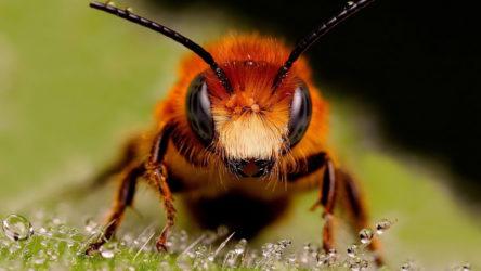 Семь насекомых с самыми болезненными укусами в мире