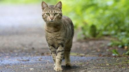 Совета и правила, позволяющие избежать укуса кошки