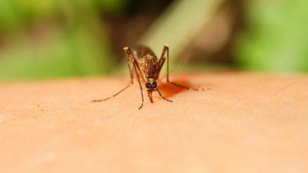 Средства для защиты от комаров и их укусов