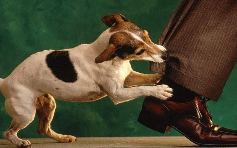 Укус собаки: что делать и как этого избежать?