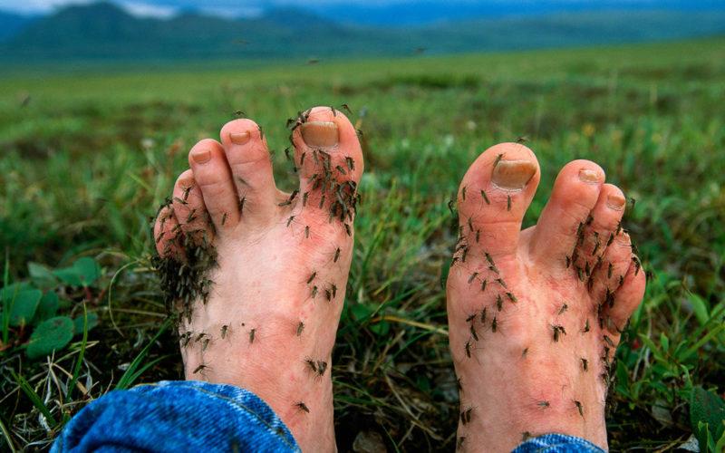 Классификация и виды комаров по версии художника Пройдёмтеса
