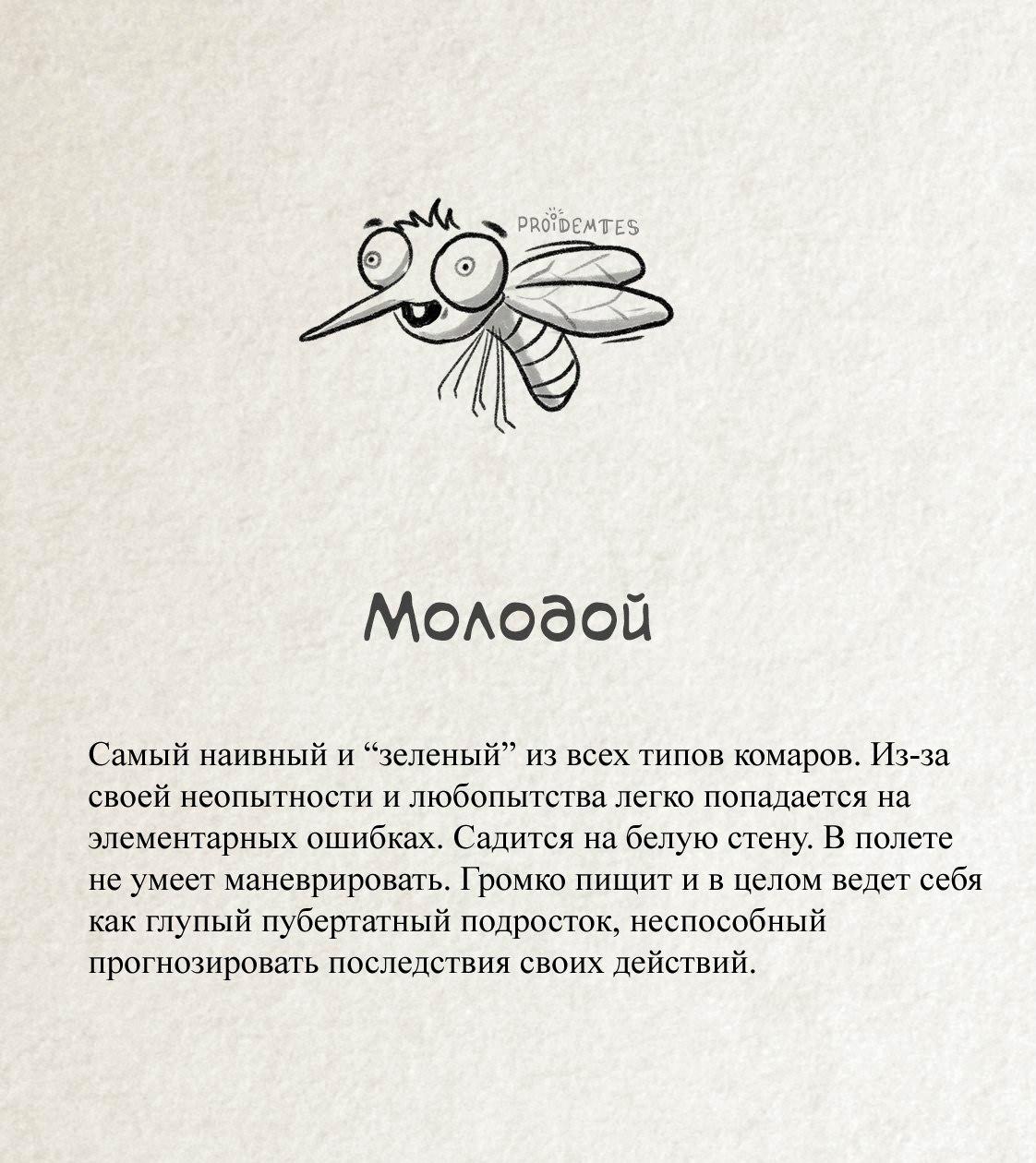 Комар «Молодой»