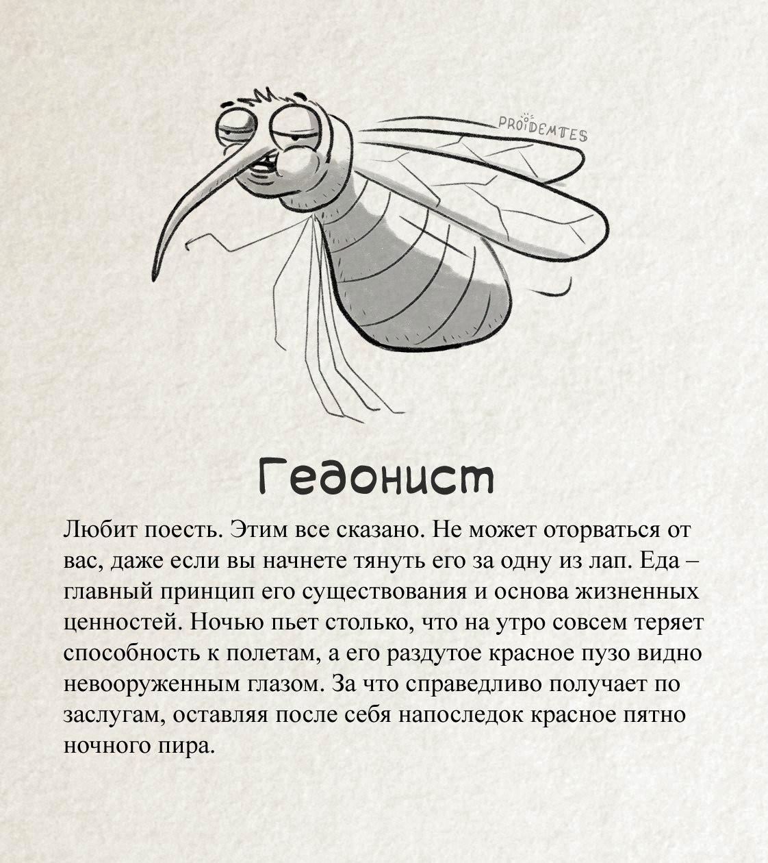 Комар «Гедонист»